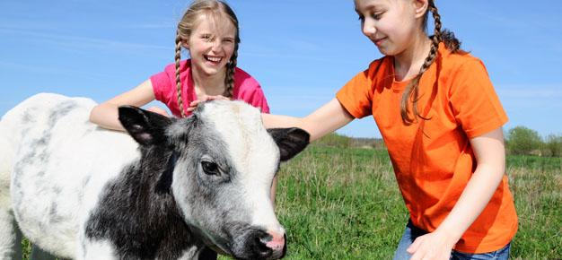Two little girls petting a beautiful calf