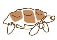 tortoise illustration 200px